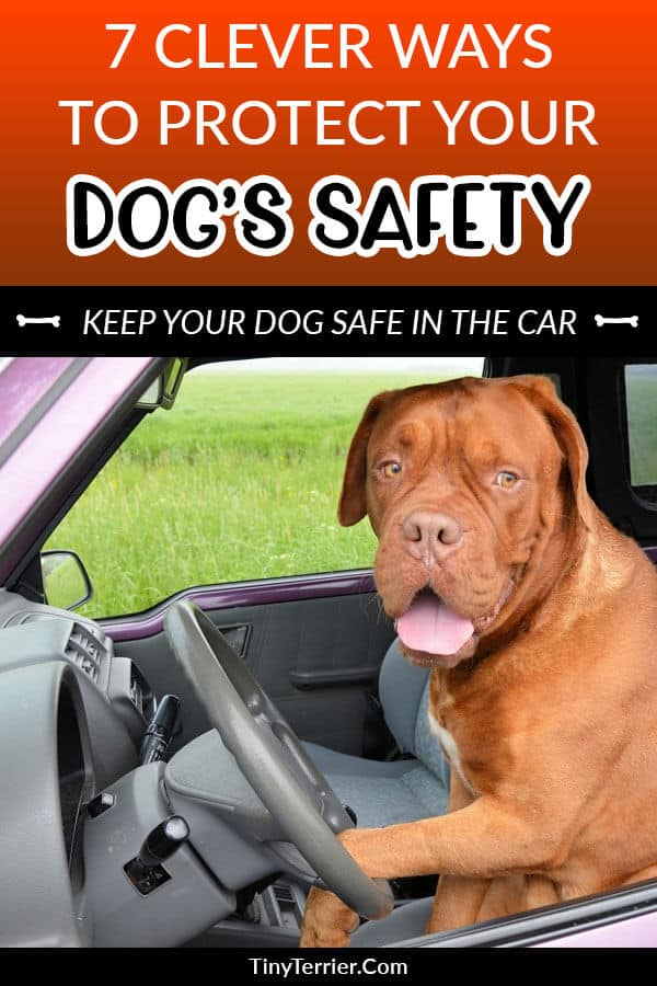 7 ways to protect your dog's safety in the car