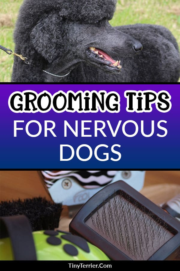 The simple four-step process to get your dog used to being brushed and make it so that they love being groomed.