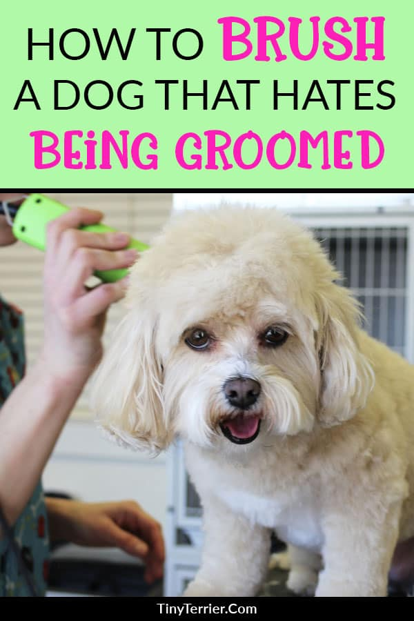 How to Groom a Dog that Hates Being Groomed