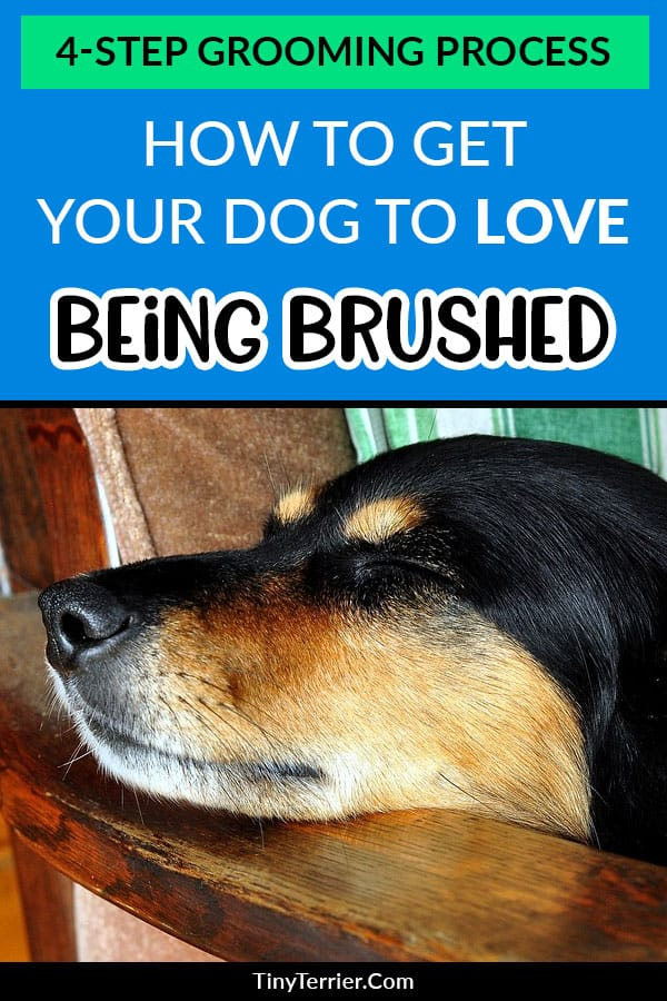 How to brush a dog that hates being groomed.