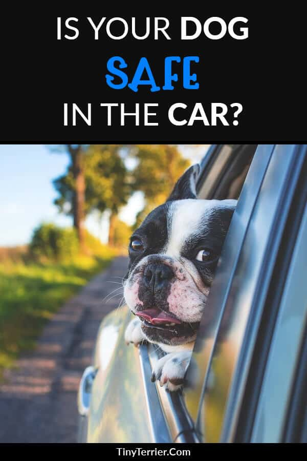 Is your dog safe in the car? Dog safety tips for traveling with your dog in the car.