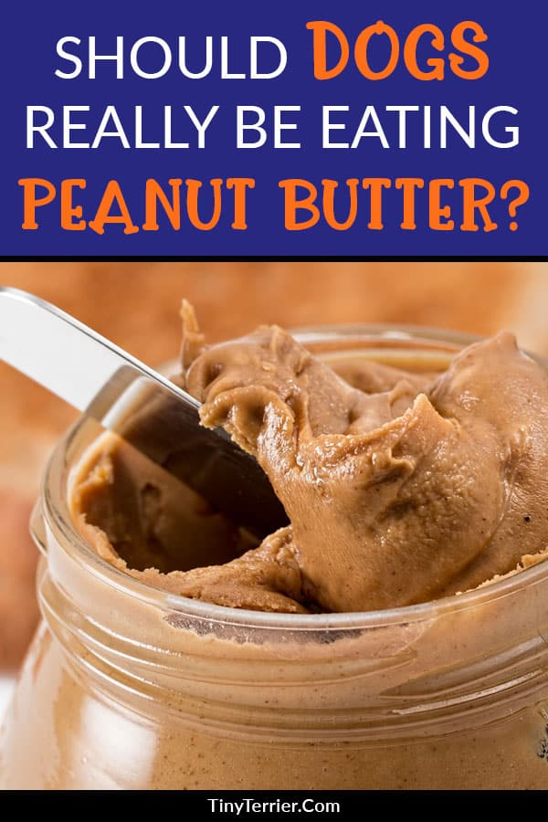 Peanut butter is a brilliant aid to dog training as it's such a high-value treat. However, some brands of peanut butter can be dangerous (or even deadly!) to your pet. Is your peanut butter dog-safe?