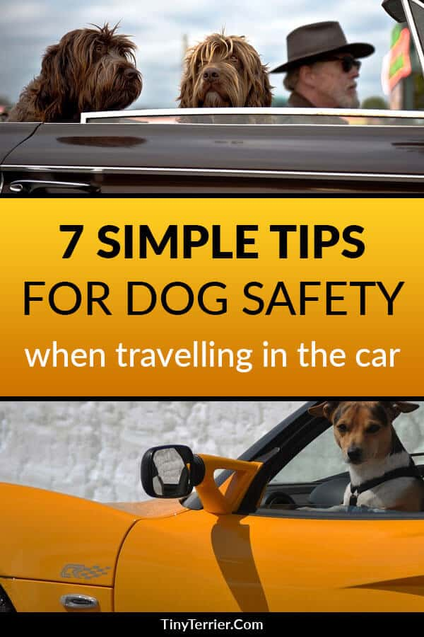 If you drive with your dog unrestrained then it's a danger not only to you and your pet, but also to other road users. Dogs can be unpredictable; the last thing you need when you're driving is a dog jumping around in the car or trying to get on your lap.