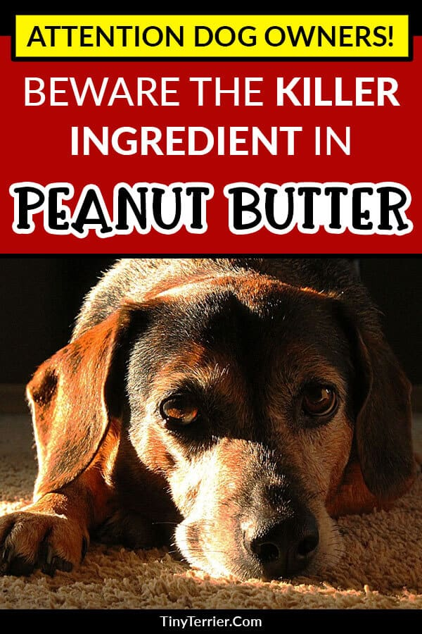 Always check the ingredients on your peanut butter to make sure you aren't putting your dog in danger. Beware the killer ingredient in peanut butter which is deadly for dogs.