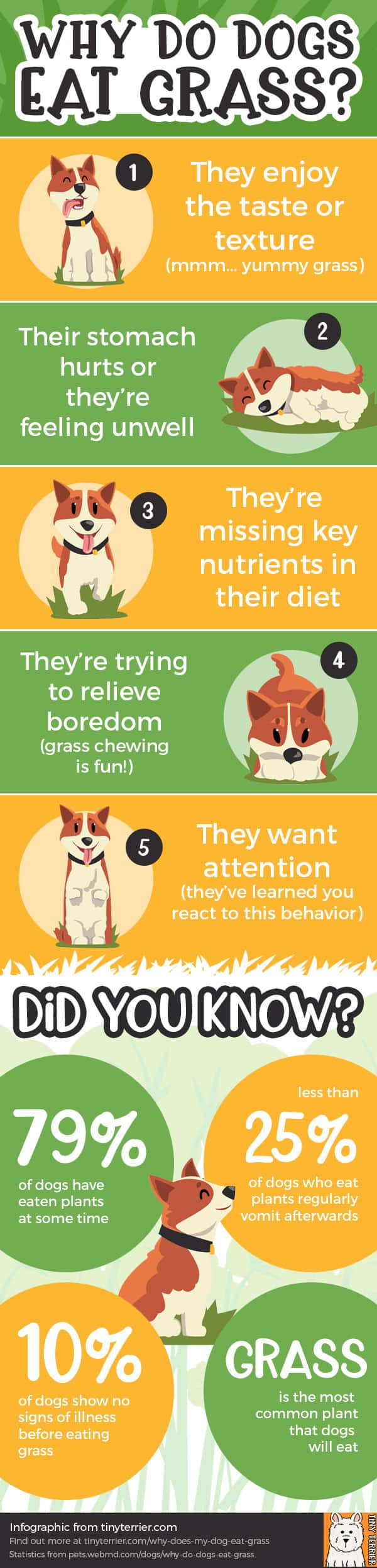 An infographic on why dogs eat grass and statistics about dogs eating grass.