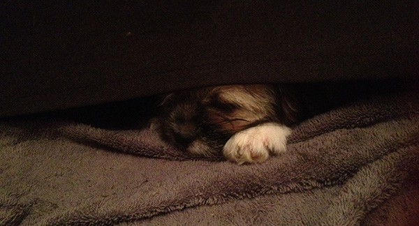 Our new dog hiding under the sofa because he was scared