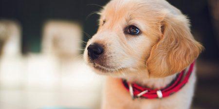 Adorable Puppy Announcement Ideas