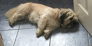 Dog lying on cool floor