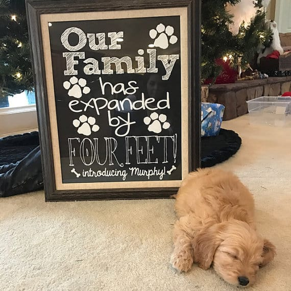 Cute puppy announcement printable