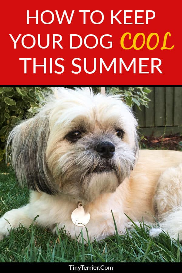 Keep your dog safe this summer by following these 19 tips to keep your dog cool when the weather is hot. Dog cooling ideas for summer and hot weather.
