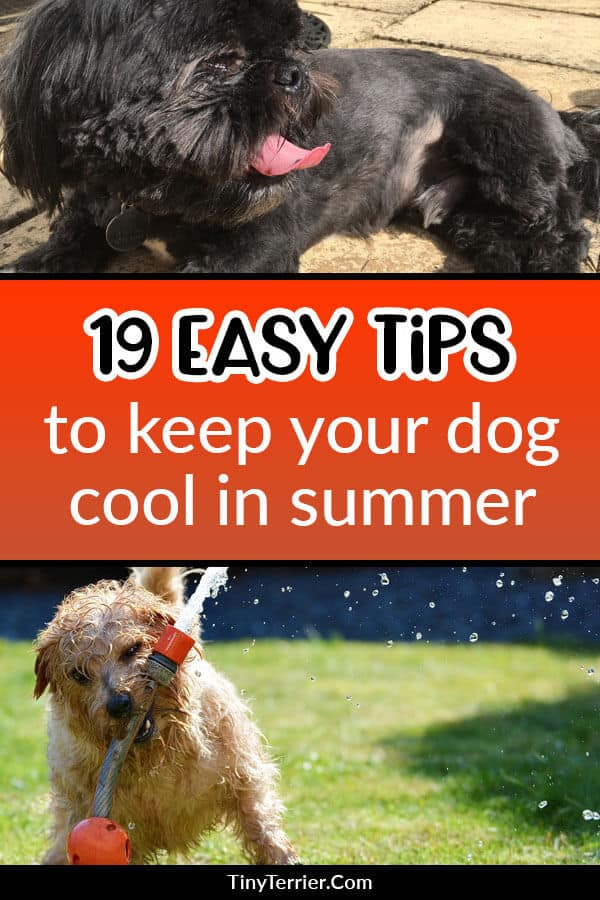 Keep your dog safe this summer by following these 19 tips to keep your dog cool when the weather is hot.