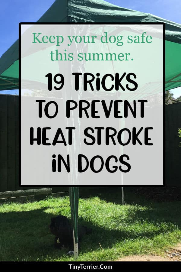 19 tricks to prevent heat stroke in dogs. Keep your dog safe in hot weather with these helpful ideas for keeping your dog cool. #dogtips
