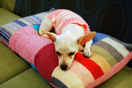 Make your own patchwork dog bed