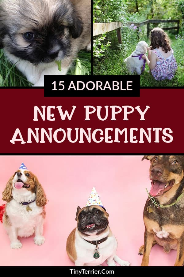 Getting a new dog is a super exciting moment that you should cherish. Here are some adorable puppy announcement ideas to share your good news and let all your friends and family share in your happiness. Tips for new dog owners.