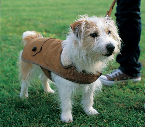 Tweed dog coat project