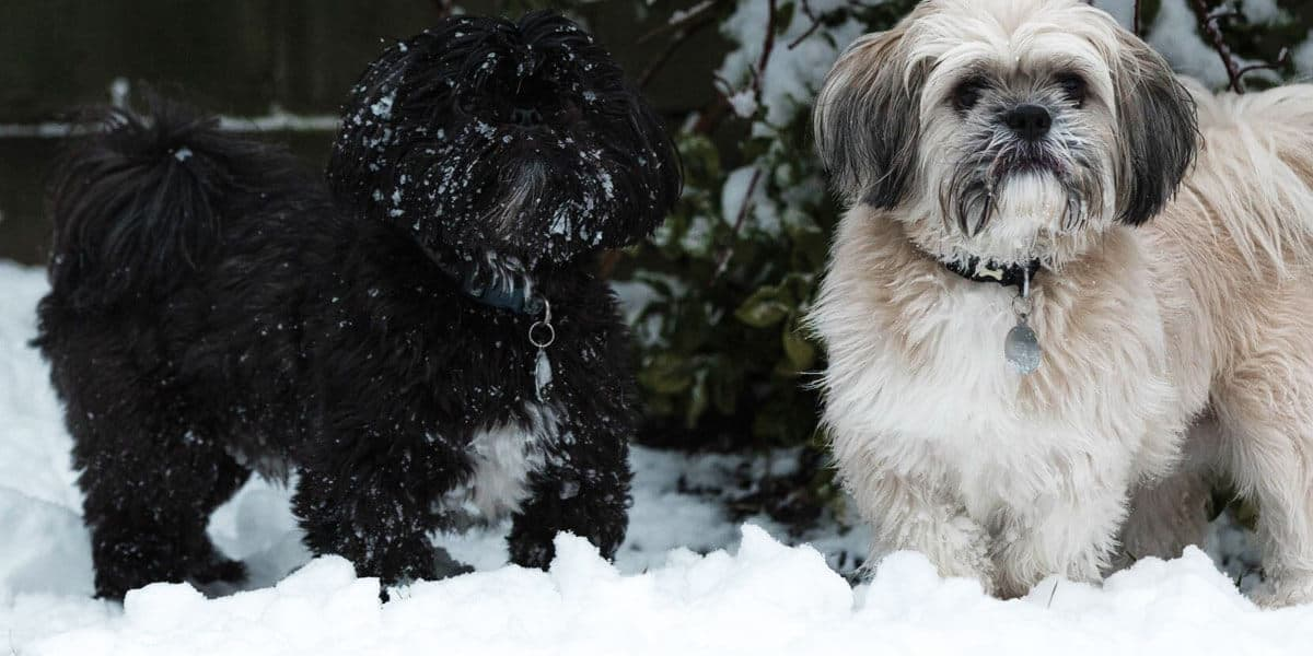 How to keep your dog safe and warm in the snow