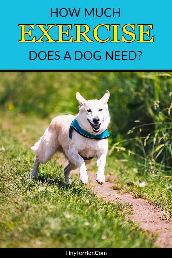 You need to keep your dog exercised to keep them healthy and happy. It's not all about walks - playtime and brain training counts too. Here is how much exercise a dog needs, so you can decide which breed of dog is right for you. #dogtraining #newdogowner