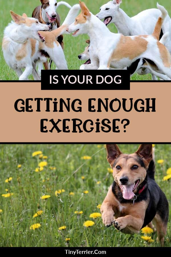 As a dog owner, you are likely to know that your dog needs to be exercised regularly in order to keep them fit and healthy. But just how much exercise does your dog need?