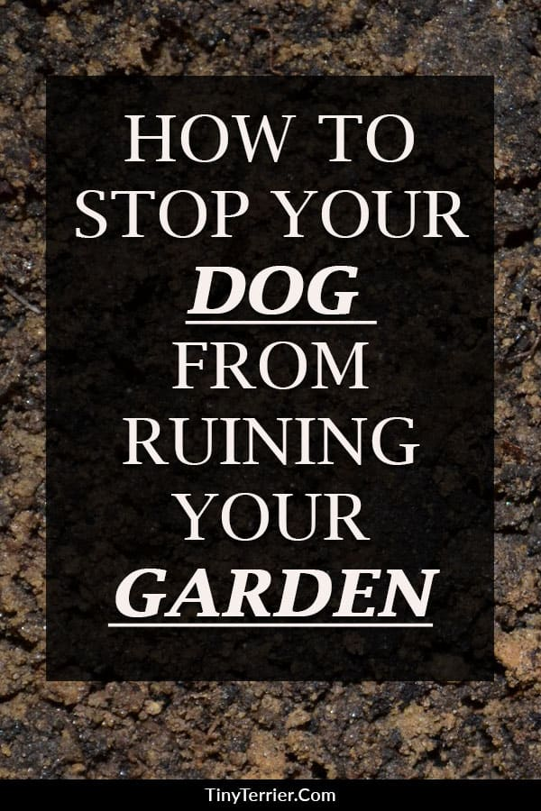 Top tips to protect your garden from your dog. How to stop your dog from digging up the garden.