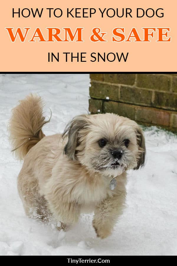 How to keep your dog warm in the snow. Keep your dog safe and warm this winter by protecting them from the snow. Learn how to keep your dog safe in the snow and the cold.