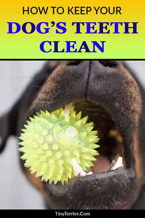 Does your dog have stinky breath? Find out the causes of bad breath in dogs as well as several different ways to improve dog bad breath and make their breath smell better.