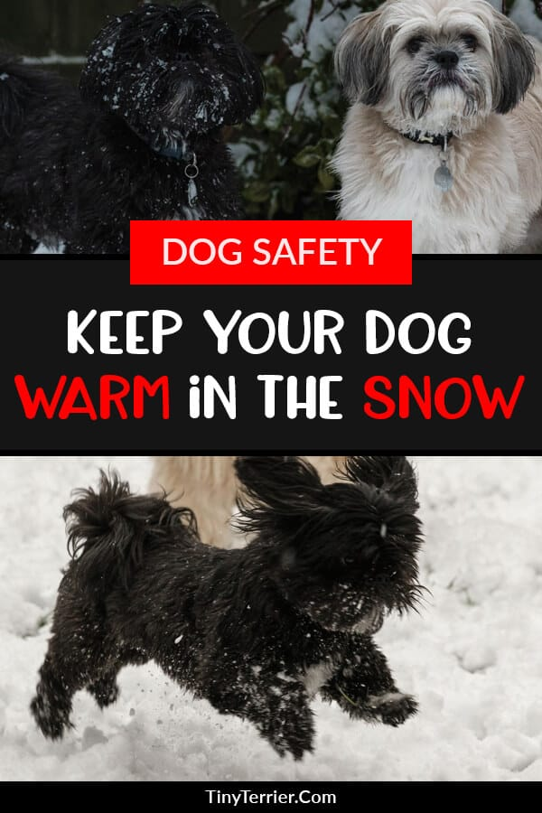 Winter can be a difficult time for dog owners, especially if there is lots of snow. Snow is very cold and this can make your dogs unwilling to go outside. Dogs and snow don't often mix very well and snow can be dangerous for your dog if they get too cold. Find out how to keep your dog safe in the snow and how to stop their paws from getting sore in the snow. #dogcare #dogtips #snow