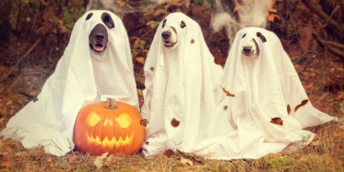 Should you feed your dogs pumpkin?