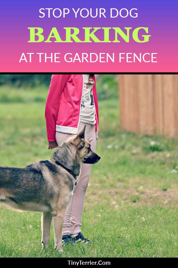 How to stop your dog from barking at the fence | Dog fence guarding