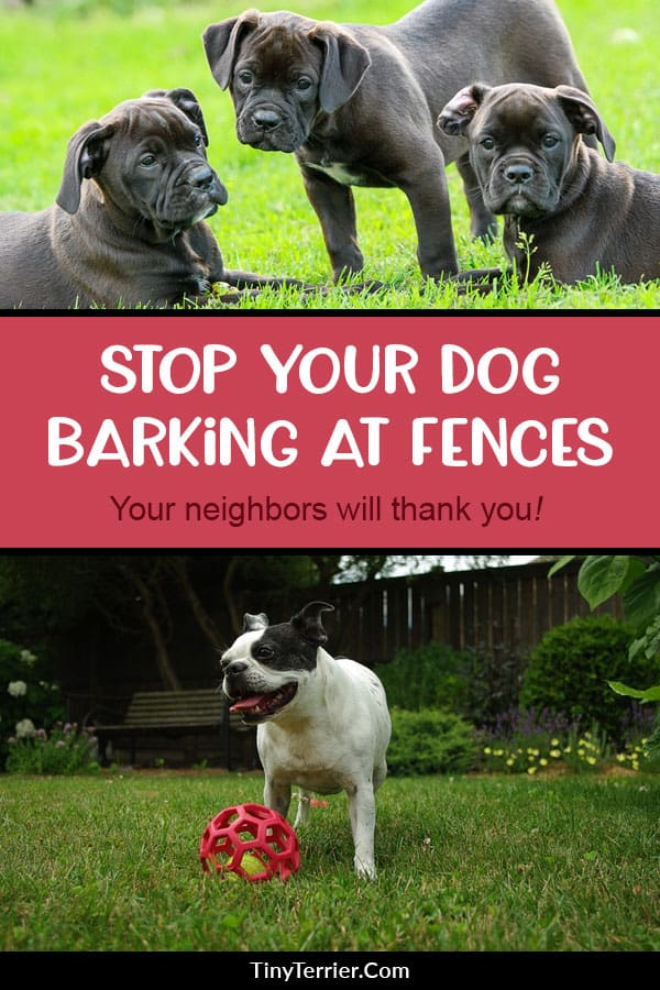 Tips to stop your dog barking at the fence. Dogs barking in the garden for apparently no reason could actually be down to several different causes. Find out why your dog could be barking as well as tricks to stop him from being so noisy.