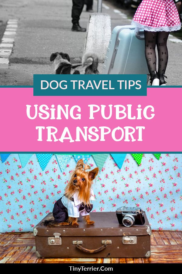 Tips for taking your dog on public transport for the first time