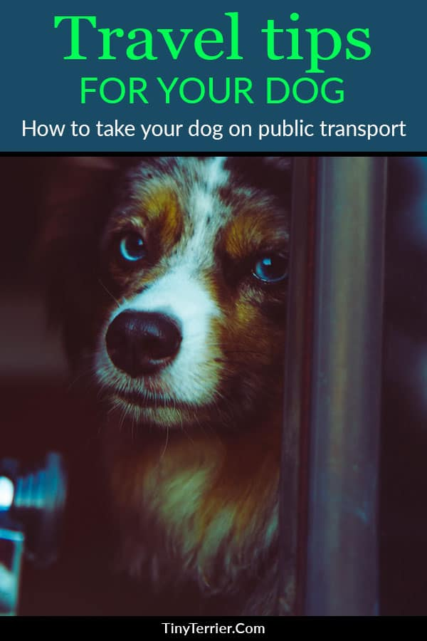 How to keep your dog happy and well behaved when travelling on public transport.