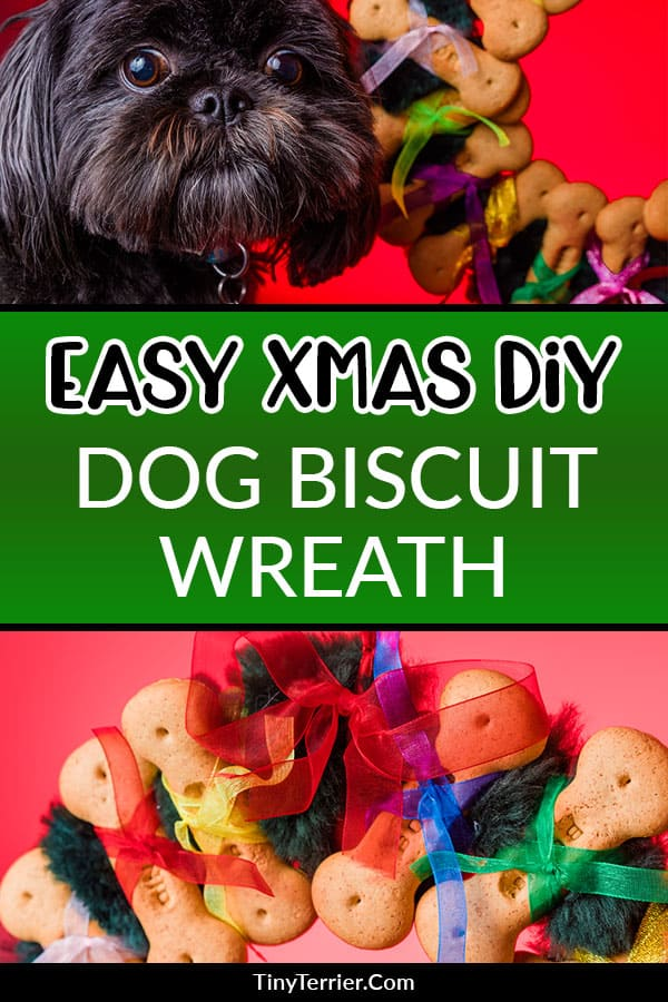 Let your dog celebrate Christmas in style with this easy DIY dog bone wreath craft project. The perfect edible Christmas craft project for your dog! #christmascraft #dogbiscuits #dogcraft