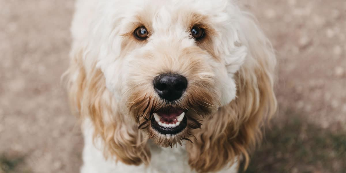 Favourite dog breeds for 2019
