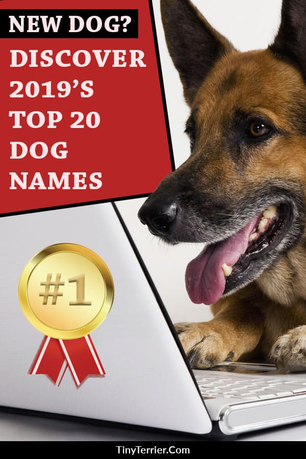 Discover 2019's Top 20 dog names with the Top 20 Dog Names for Male and Female Dogs. Cool dog names are essential for your pooch's street cred, so go with the crowd and choose one of the most popular dog names. #dogs #puppies