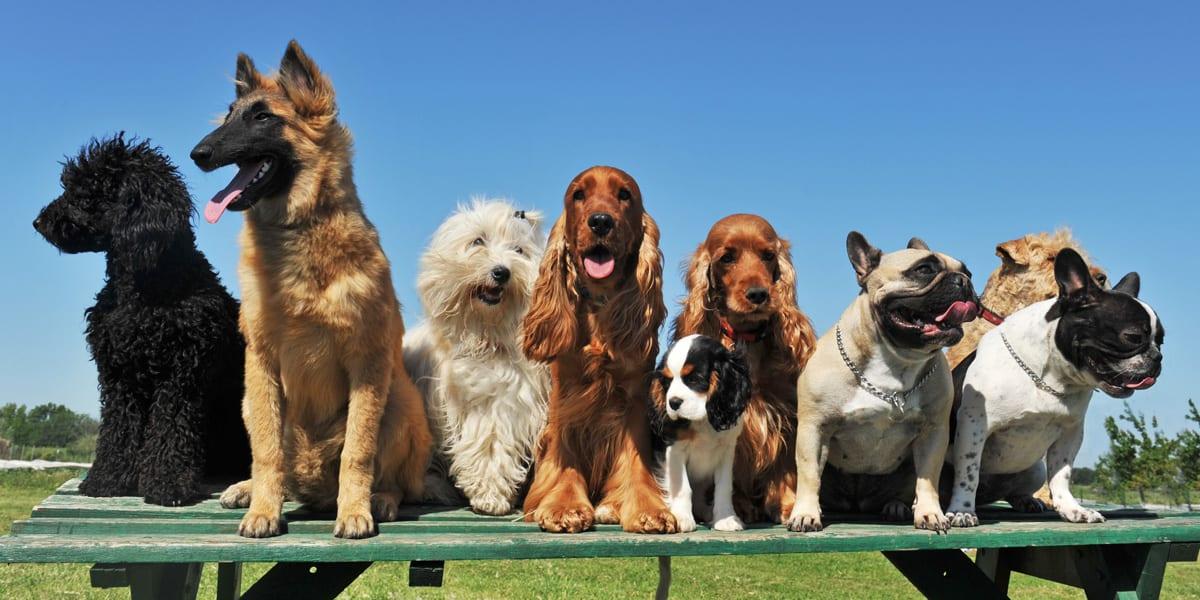 Best Dog Names for 2019