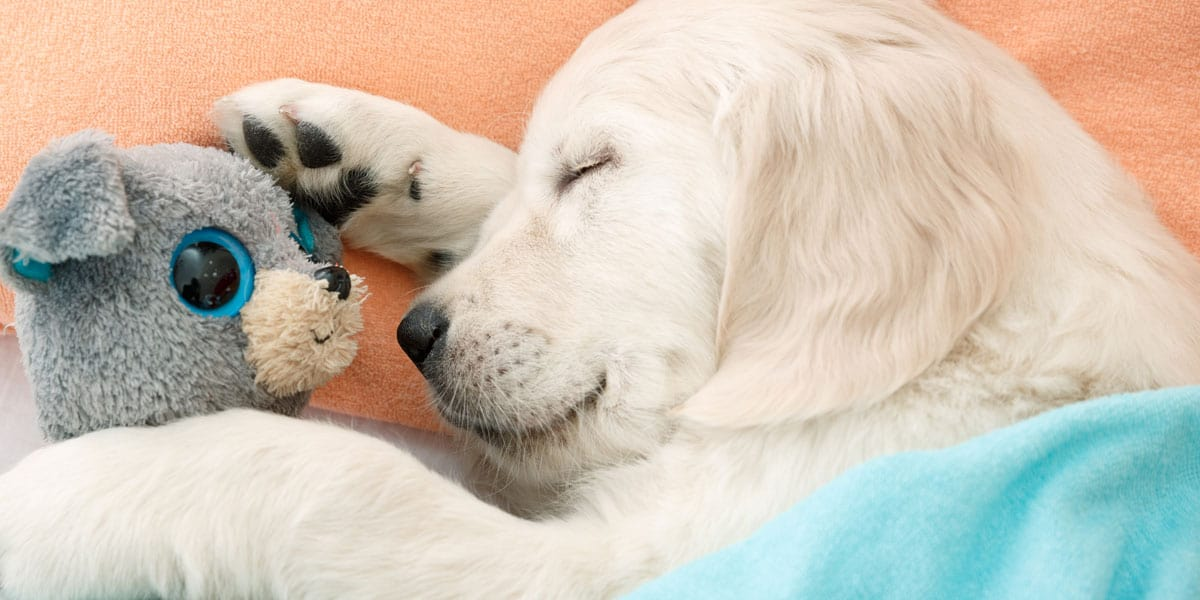 What are the best toys for puppies? Find the best puppy toys for 2019