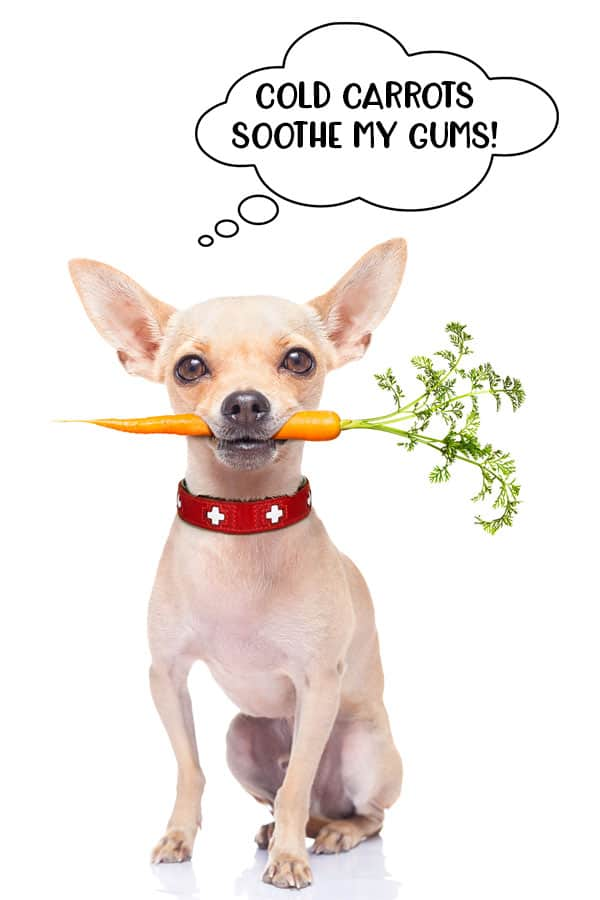 Cold carrots can help to soothe puppy gums when they are teething