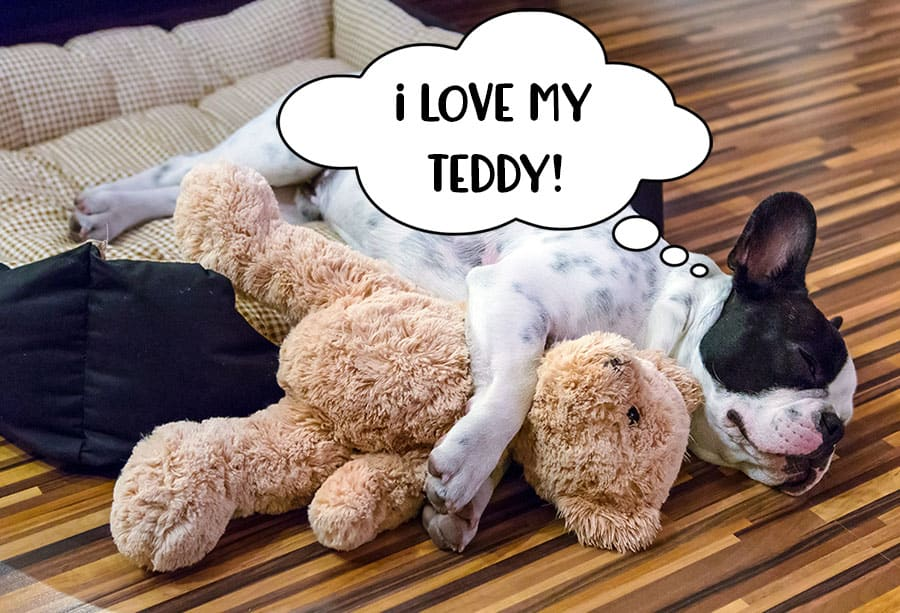 Sleeping dog cuddling his teddy