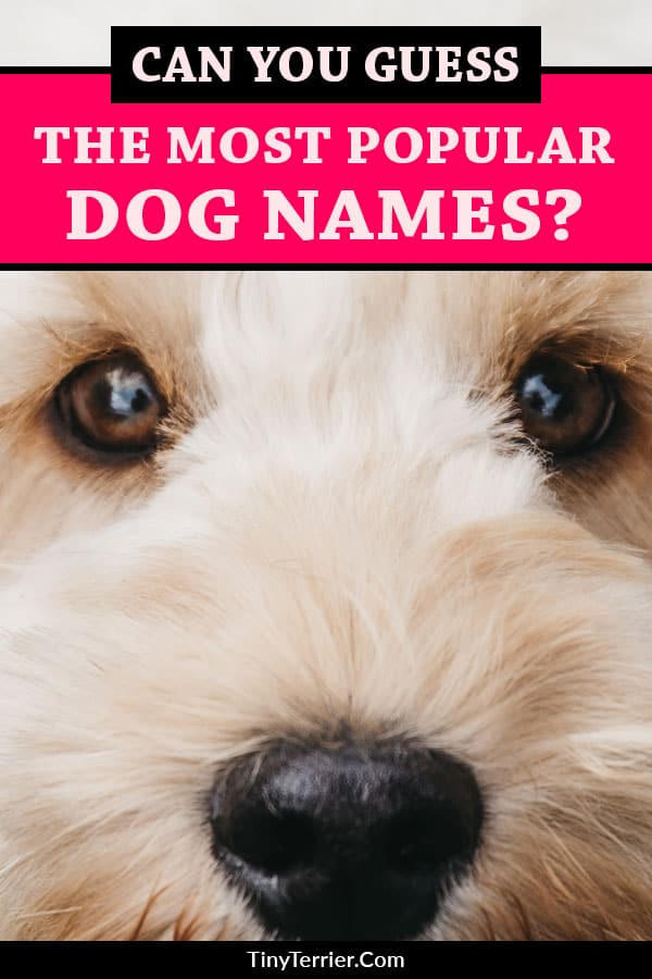 Can you guess the MOST popular dog names for 2019?? Never again wonder