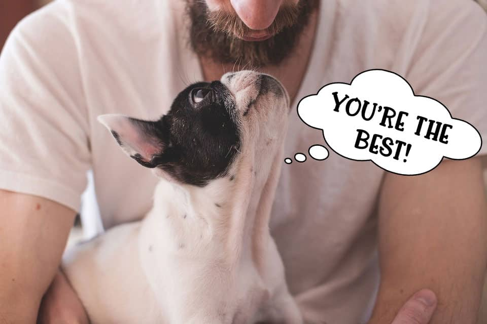 French bulldog dog staring lovingly at owner saying 'You're the best'