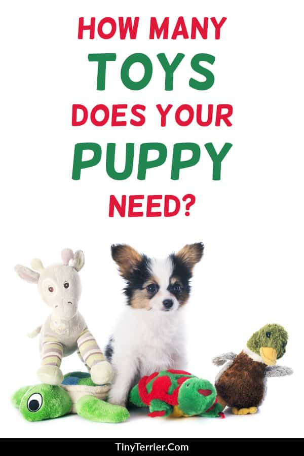 How many toys does your puppy need? Avoid spoiling your dog with toys he'll never play with, with this handy guide to the best puppy dog toys. Choose toys your puppy will love, to make your new puppy happy. #puppy #puppytoys #dogs