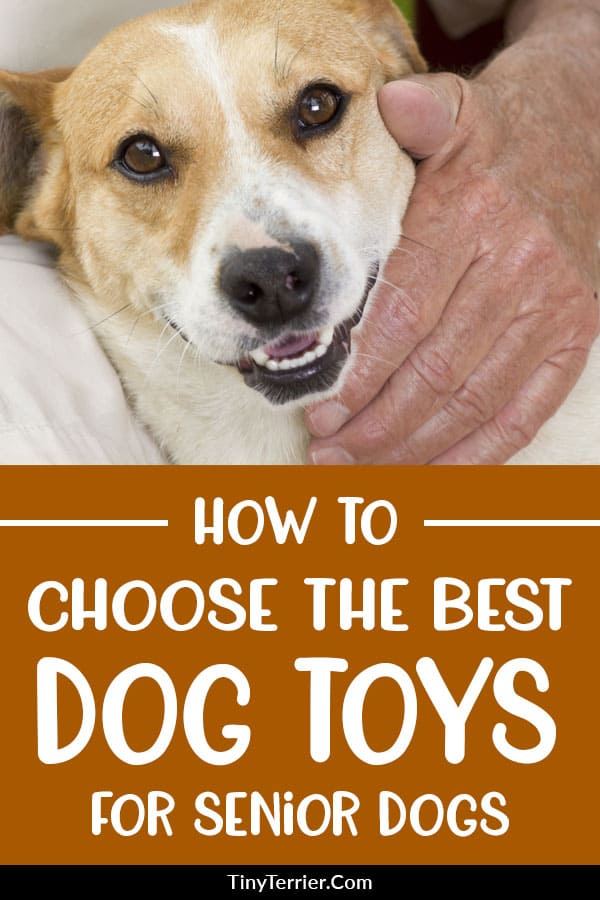 Top 10 Best Toys for Senior Dogs [2019 Edition]