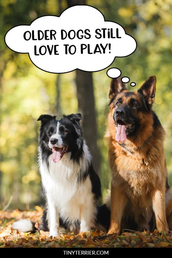 Older dogs still love to play!