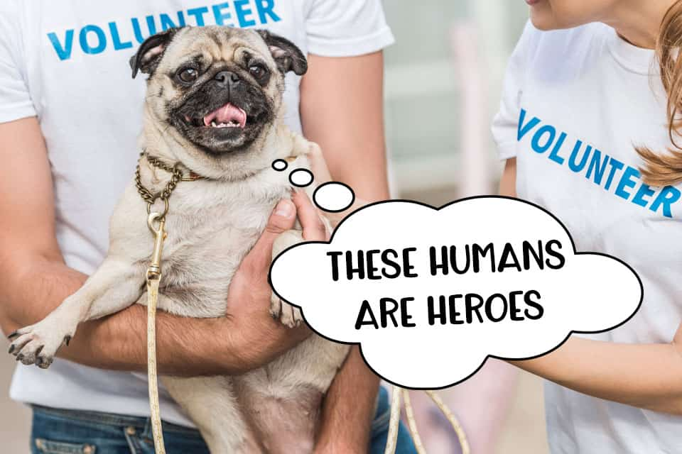 Dog rescue volunteers are heroes