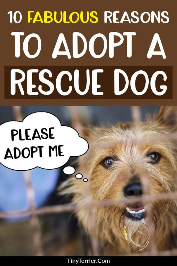 Should I adopt a rescue dog? Discover 10 amazing reasons why you should adopt a rescue dog instead of buying from a breeder. Adopt, don't shop! #adoptdontshop #dogrescue #shelterdogs