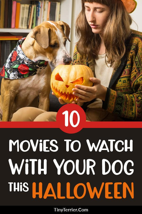 Do you have a favourite Halloween dog movie? There are many excellent choices of Halloween dog films - here are the best Halloween dog movies. #Halloween #dogs