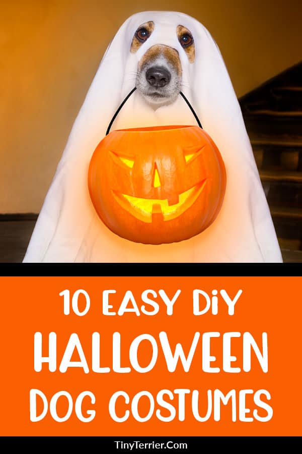 Easy DIY Halloween Dog Costumes to Make