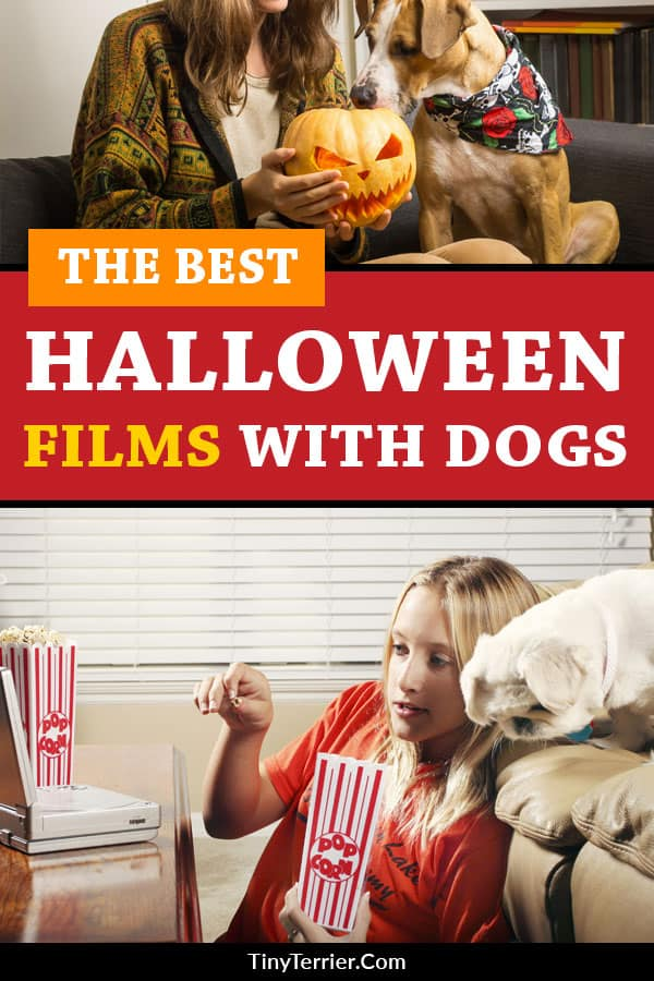 The best Halloween films with dogs. These scary films with dogs in them are perfect for your dog-friendly Halloween night!