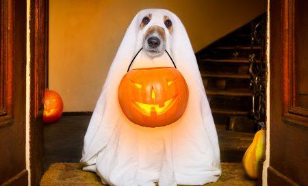 Easy DIY Halloween Dog Costumes to Make