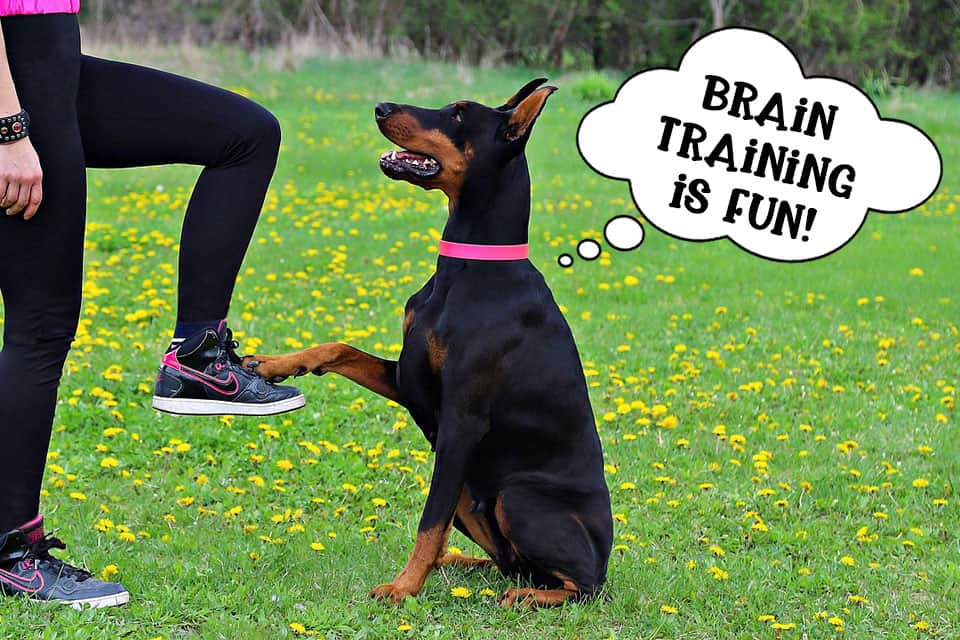 Clever dog brain training